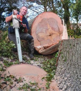 Greentrees Arboricultural Services Ltd. We offer a broad range of arboriculture and consultancy services to the domestic and corporate sectors, covering the whole of Devon and Cornwall